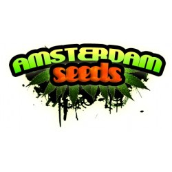 Royal Queen seeds White Widow Automatic 3ks