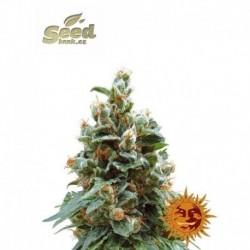 Royal Queen Seeds AMG feminized 3ks